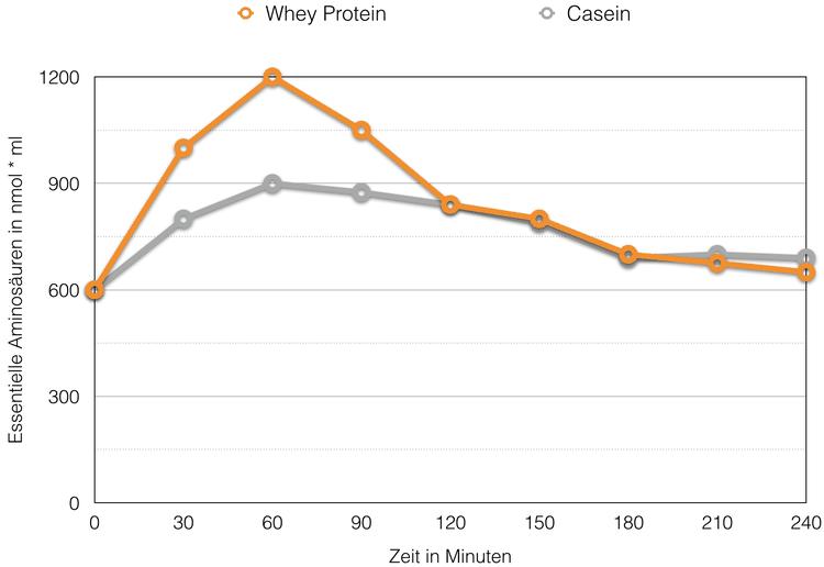 Die Wirkung von Whey Protein & Casein